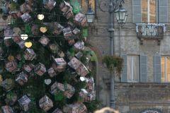 albero2008159