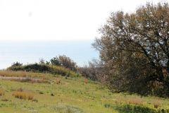 borgopiazza2marzo2011 028
