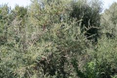 borgopiazza2marzo2011 031