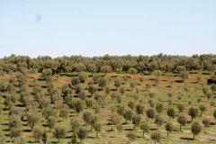 borgopiazza2marzo2011 033
