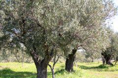 borgopiazza2marzo2011 041