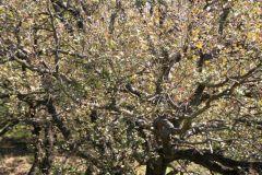 borgopiazza2marzo2011 049