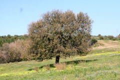 borgopiazza2marzo2011 081