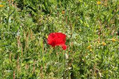 borgopiazza2marzo2011 084