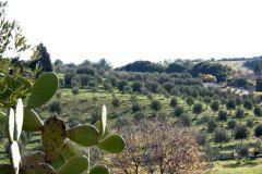 borgopiazza2marzo2011 134
