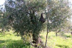 borgopiazza2marzo2011 136