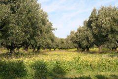 borgopiazza2marzo2011 142