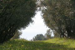 borgopiazza2marzo2011 151