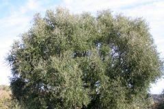 borgopiazza2marzo2011 155