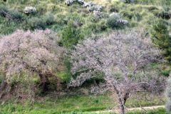borgopiazza2marzo2011 173