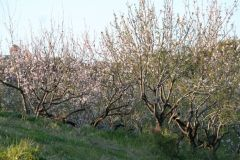 borgopiazzamarzo2011 089