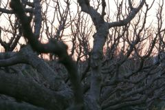 borgopiazzamarzo2011 138