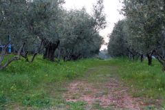 borgopiazzamarzo2011 150