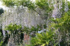 fioriepiante058
