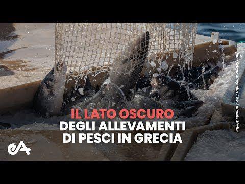Il lato oscuro degli allevamenti di pesci in Grecia