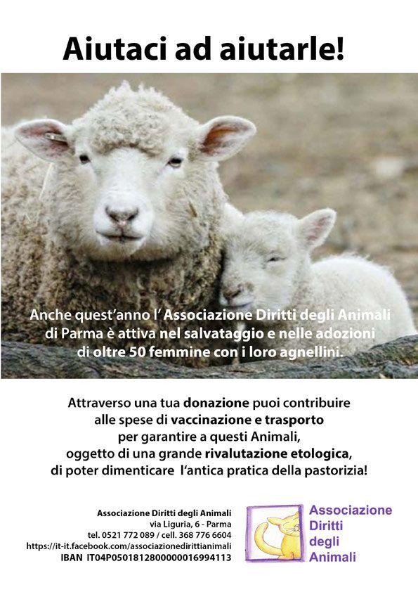 Salviamo le pecore