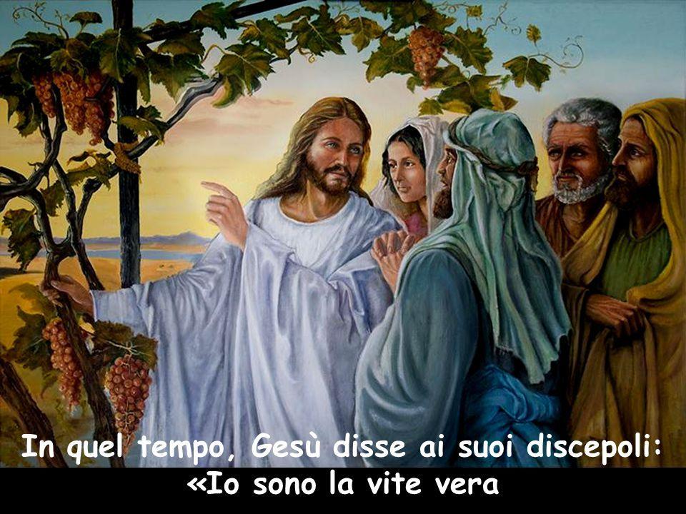 Riflessione sul Vangelo di Don Umberto Cocconi: Io sono la vera vite