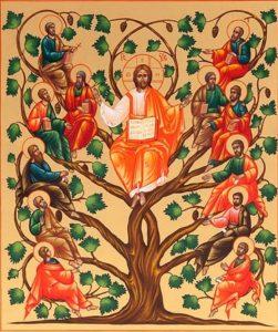 Commento al Vangelo di Padre Enzo Bianchi: Un'unica vite, un'unica linfa di vita