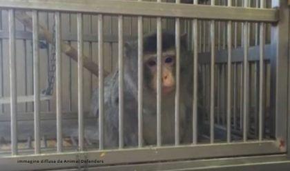 MACACHI IN GABBIA ALL'UNIVERSITA' DI FERRARA denunciato per maltrattamento di animaliil Rettore dell'Universita' di Ferrara